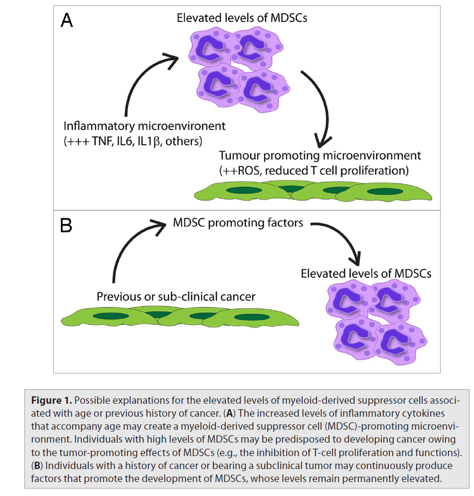 pdf/view Cutaneous T cell lymphoma : mycosis