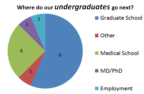 Where do our Undergraduates go next?